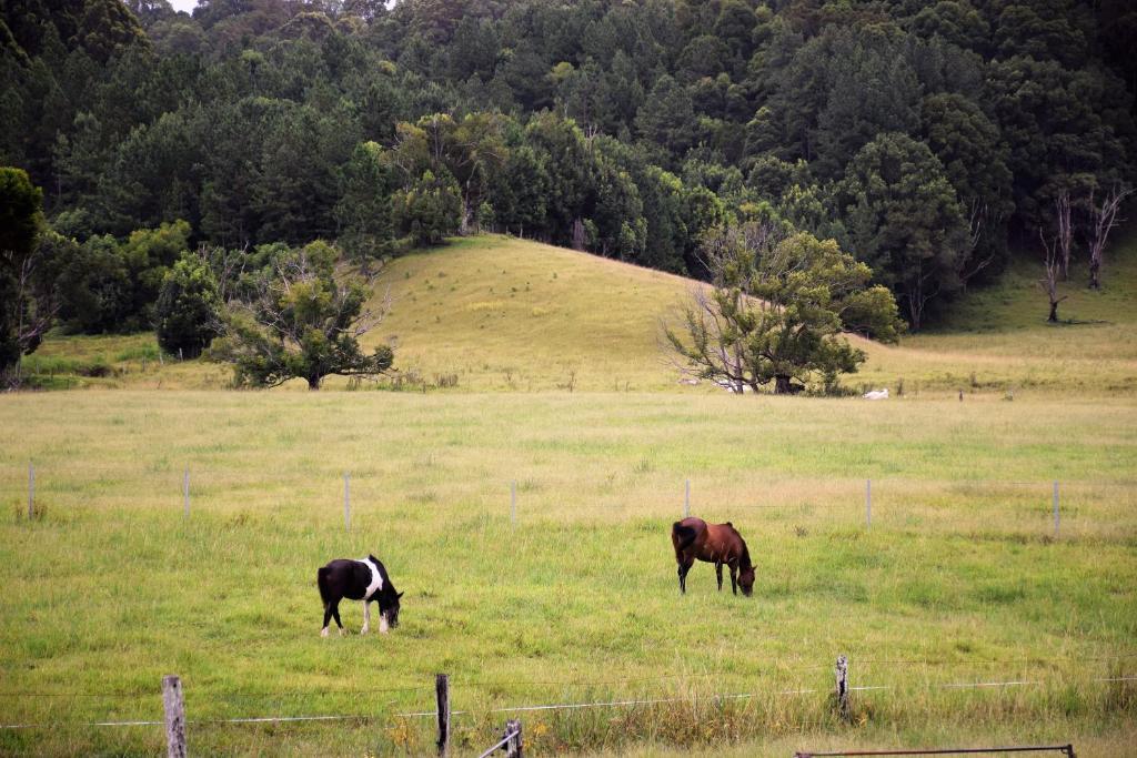 Mooyabil Farm Holidays MullumbimbyCreek Australia