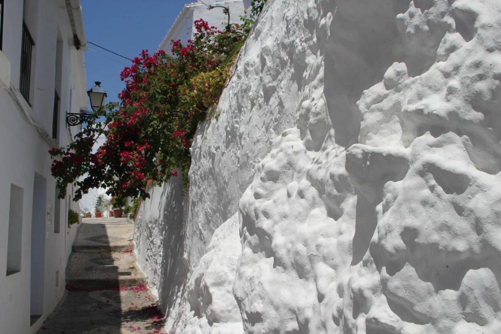 Algarabí during the winter