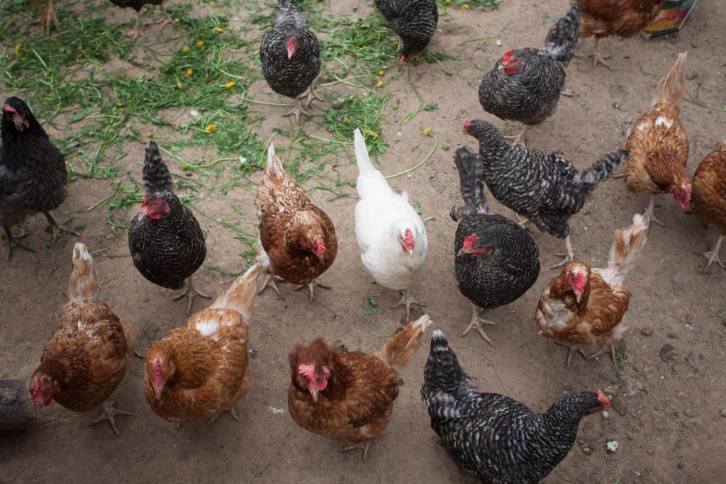 Eco-farm na Novoy Rige Hotel