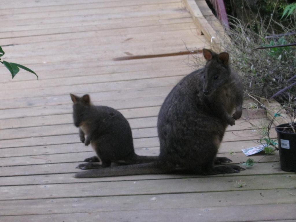 Aaa Granary Accommodation The Last Resort Resort Aaa Granary Accommodation Promised Land Australia