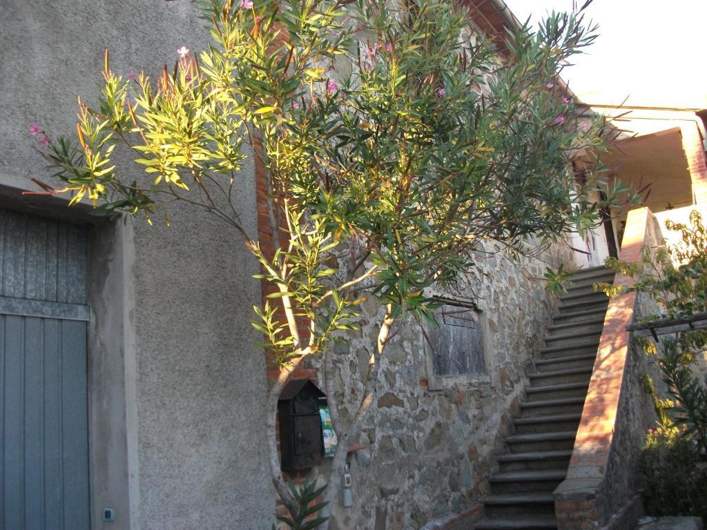 Casa di piero a scalabrelli montiano grosseto u2013 prezzi aggiornati