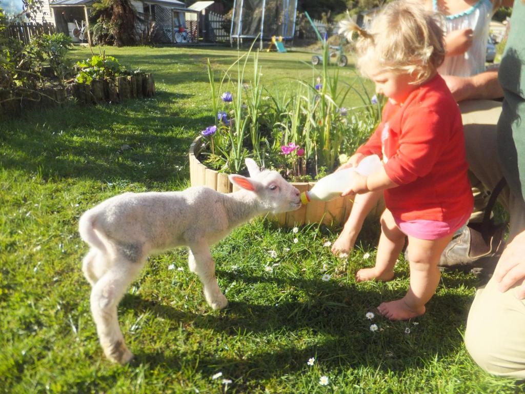 idyllic farm cottage petting zoo greymouth new zealand booking com