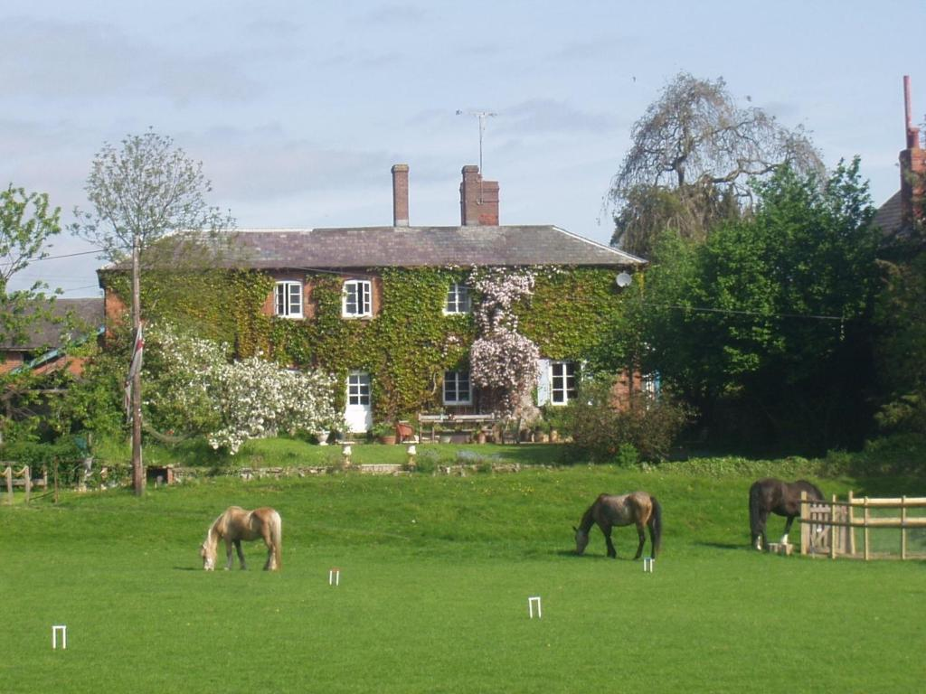Animals at the country house or nearby