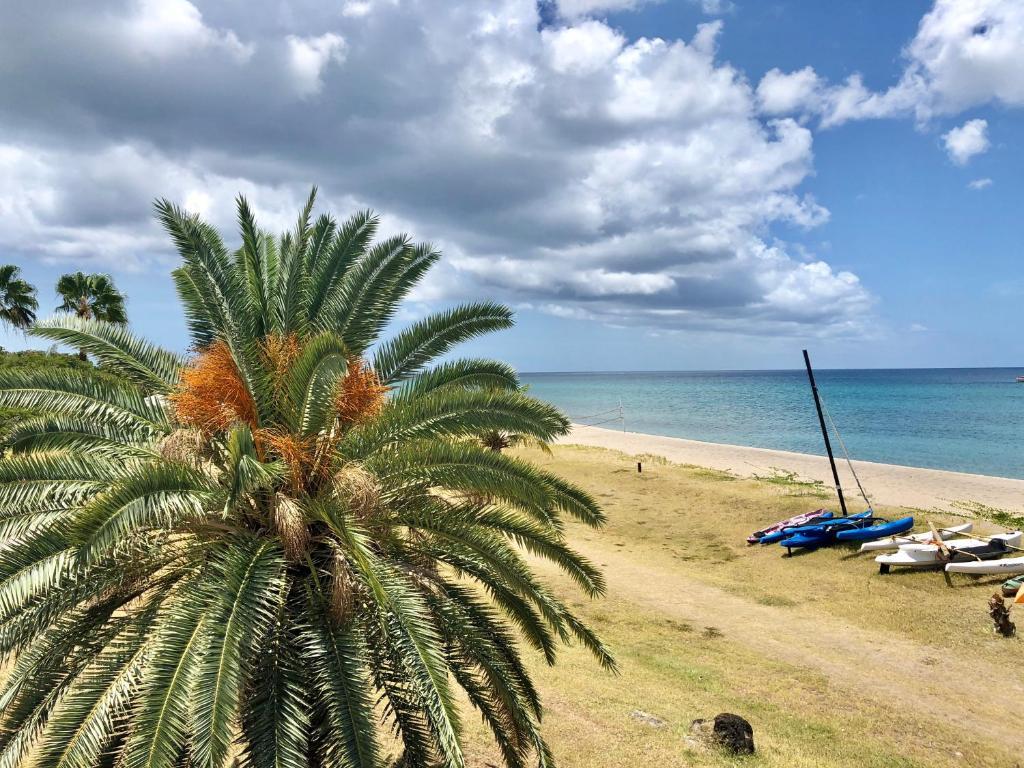 To4u palm coast dating. Dateringen show froukje.