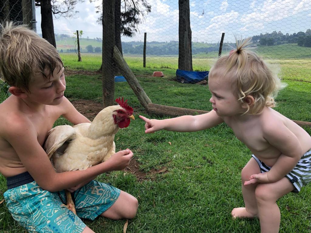 A Farm Life Curry's Post Harga Terkini 2018
