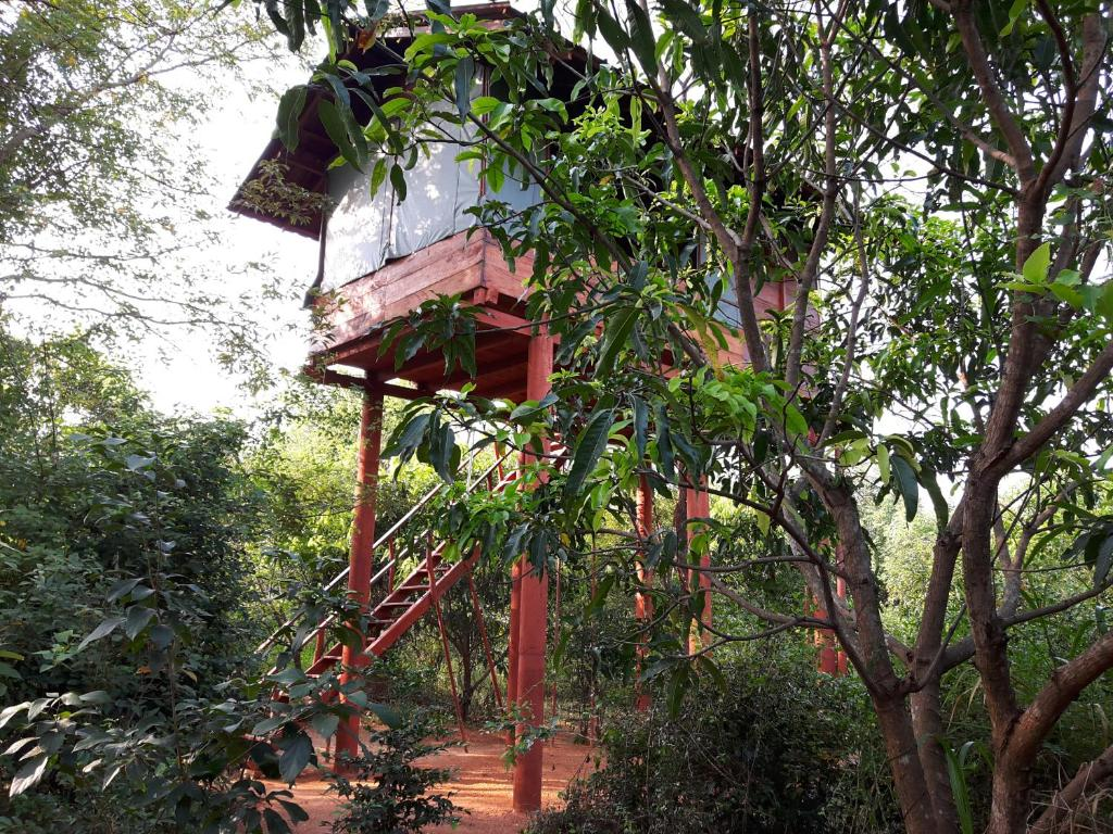 Dambulla Tree House