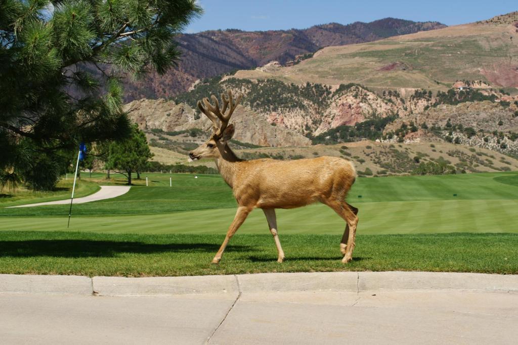 Garden of the Gods Club & Resort, Colorado Springs, CO - Booking.com