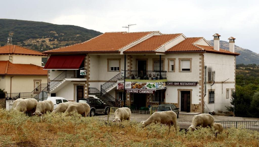 Animales en el hostal o pensión o alrededores