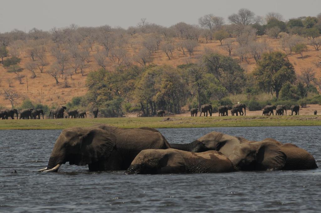 Ngoma Safari Lodge