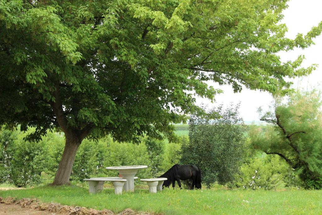 Bonita foto de Casa Rural Cal Dalfó