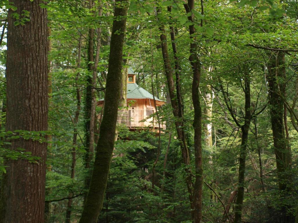 cabane dans les arbres bretagne