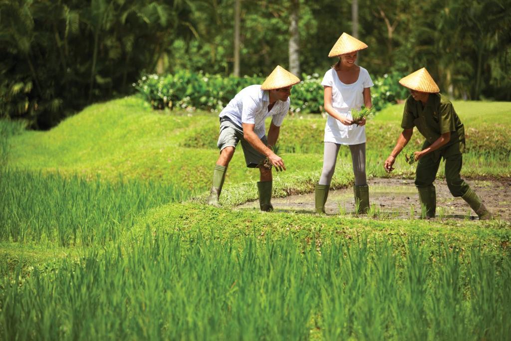 kegiatan bercocok tanam di Four Seasons Resort Bali