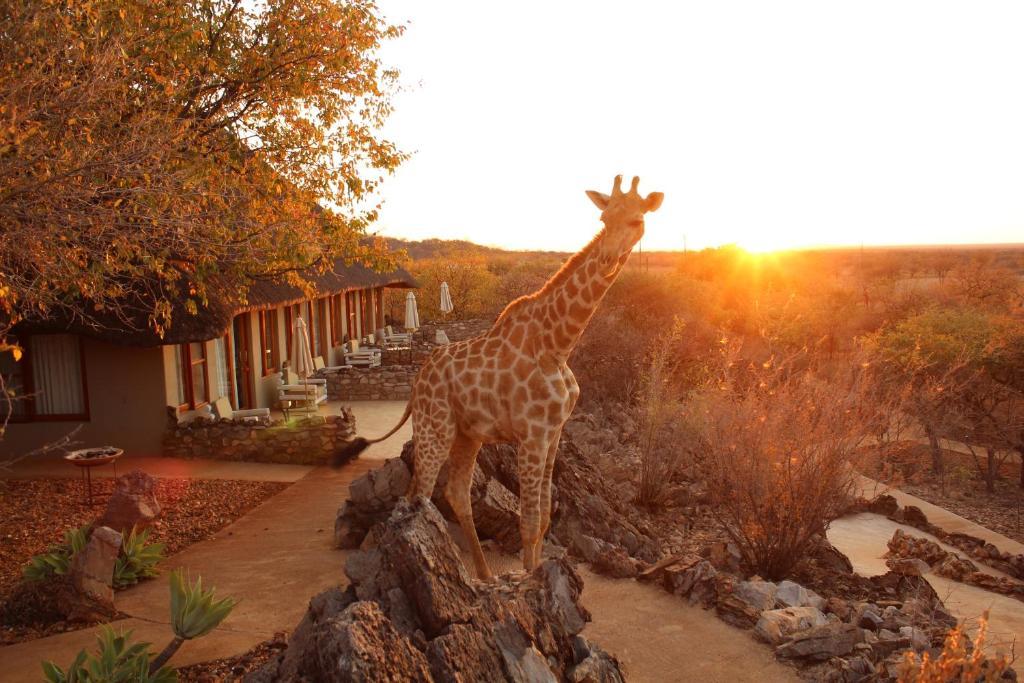 Okutala Etosha Lodge