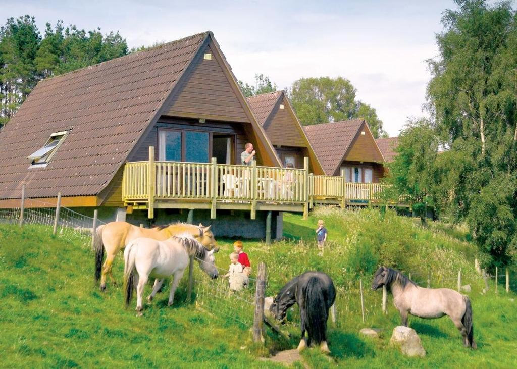 Animals at the resort village or nearby