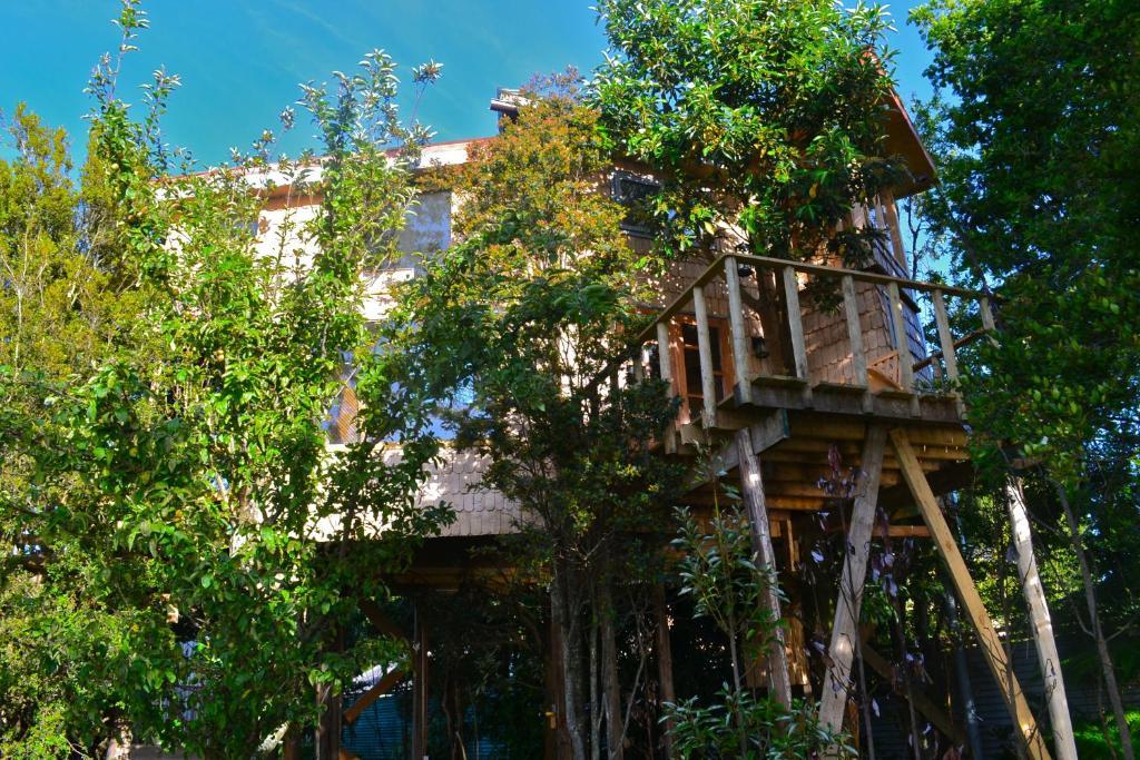 Resultado de imagen de la casa del arbol de chiloe