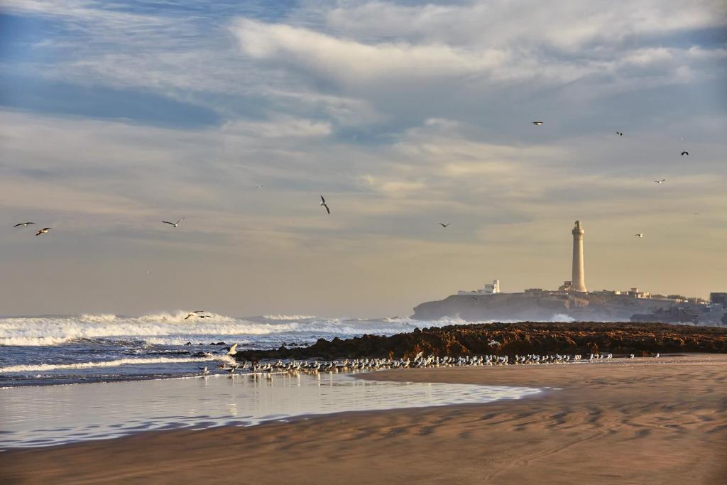 Four Seasons Hotel Casablanca, Casablanca – Updated 2018 Prices