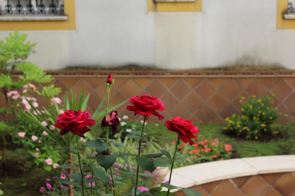 Apartamento Jardín De La Ribera. fotografía