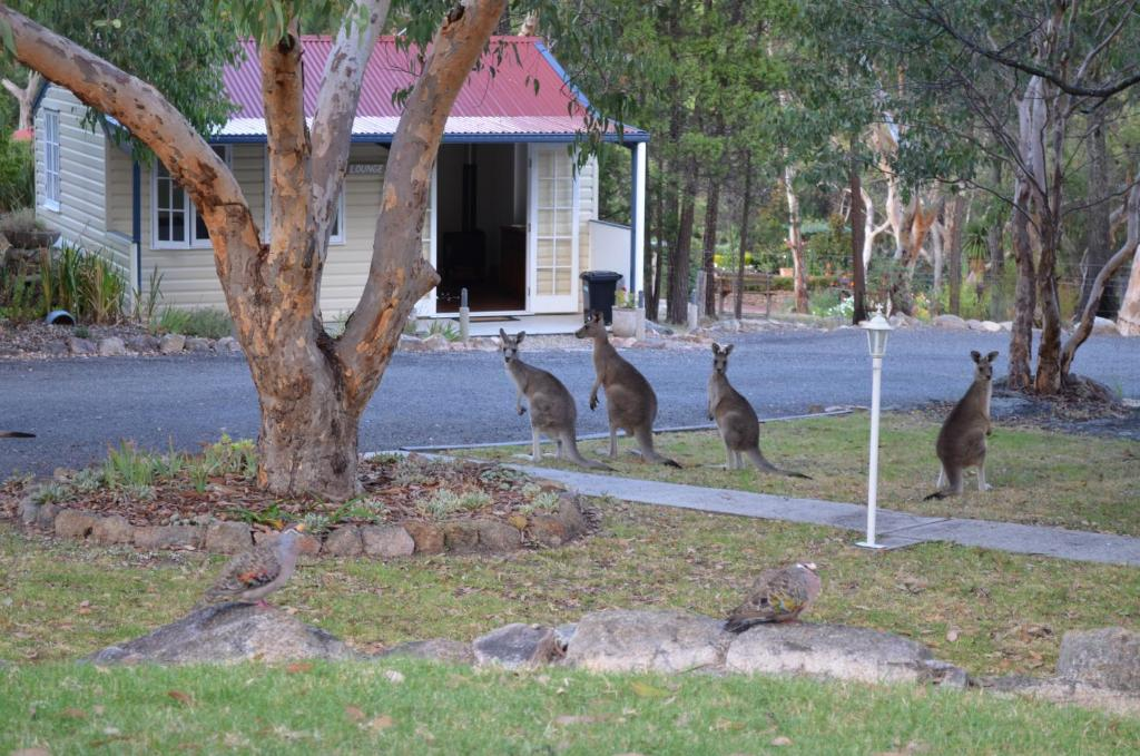 Bed And Breakfast Stanthorpe