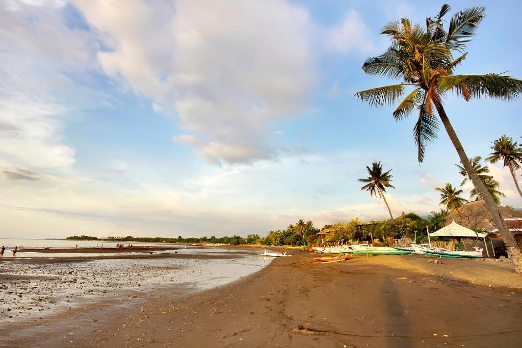 Hasil gambar untuk Lovina Beach