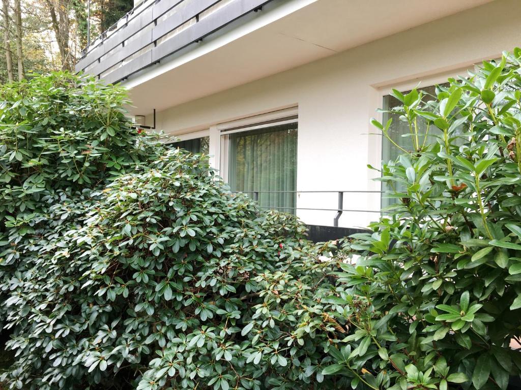 Allee Apartment, Baden-Baden – Precios actualizados 2019