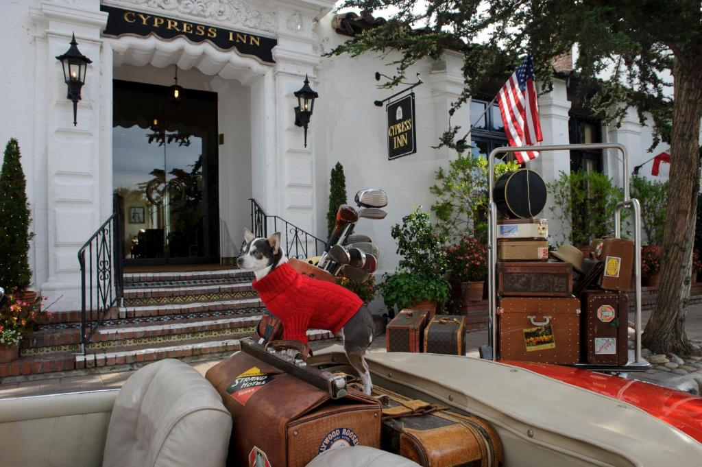 cypress inn, Famous Pet Friendly Hotels in the World