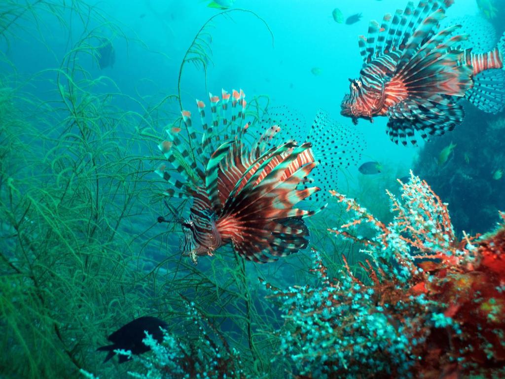 Coral Bay Beach and Dive Resort