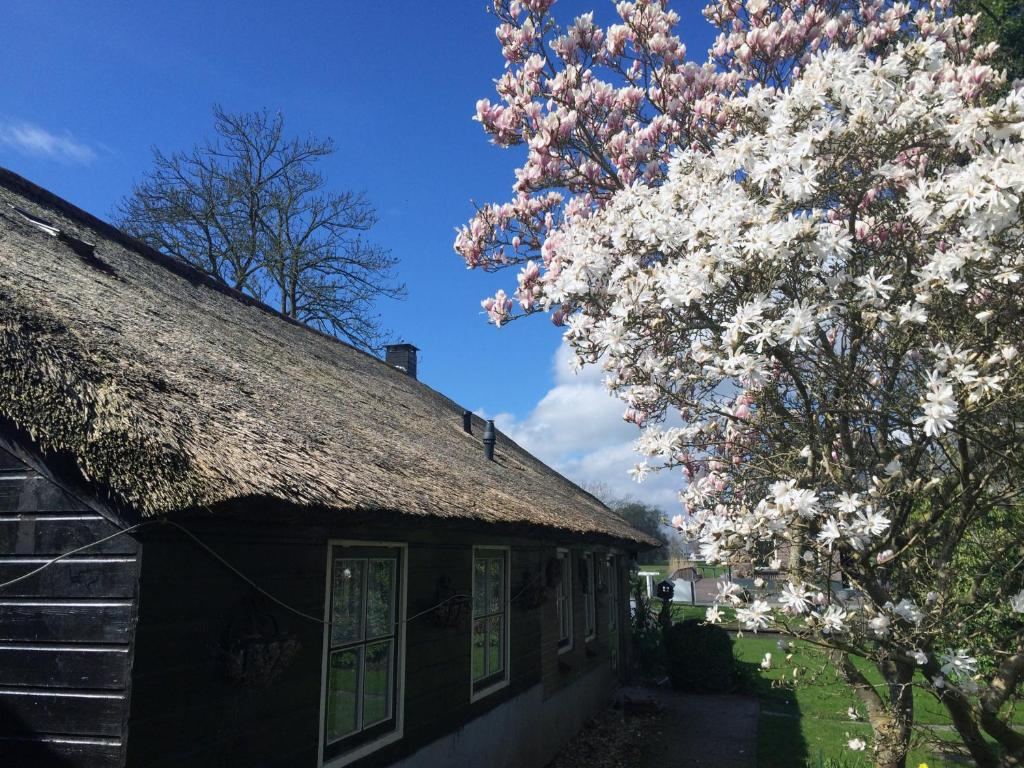 the black sheep hostel, giethoorn, netherlands - booking
