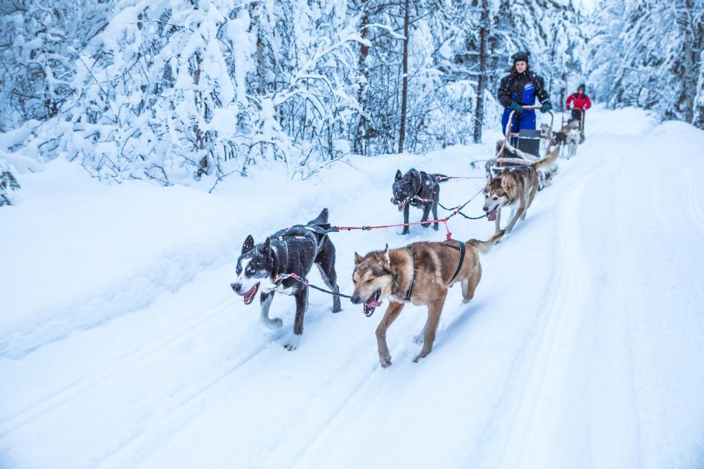 Image result for Beana Laponia finland