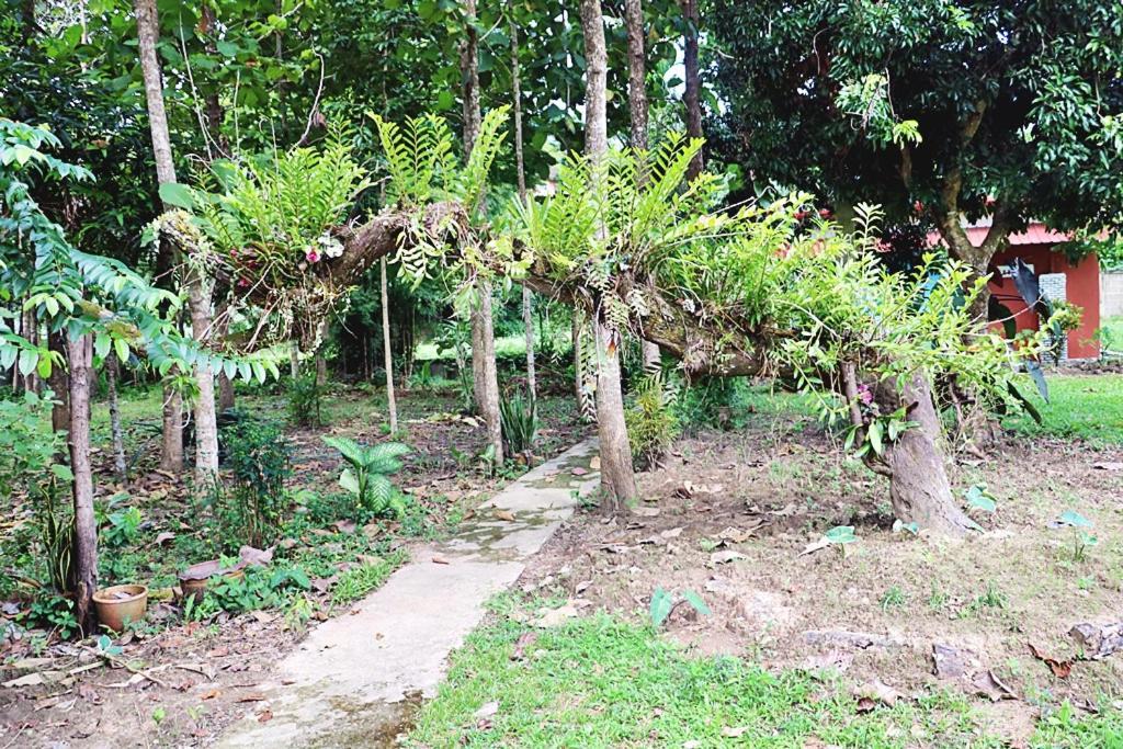 Resorts In Ban Pa O Chiang Rai Province