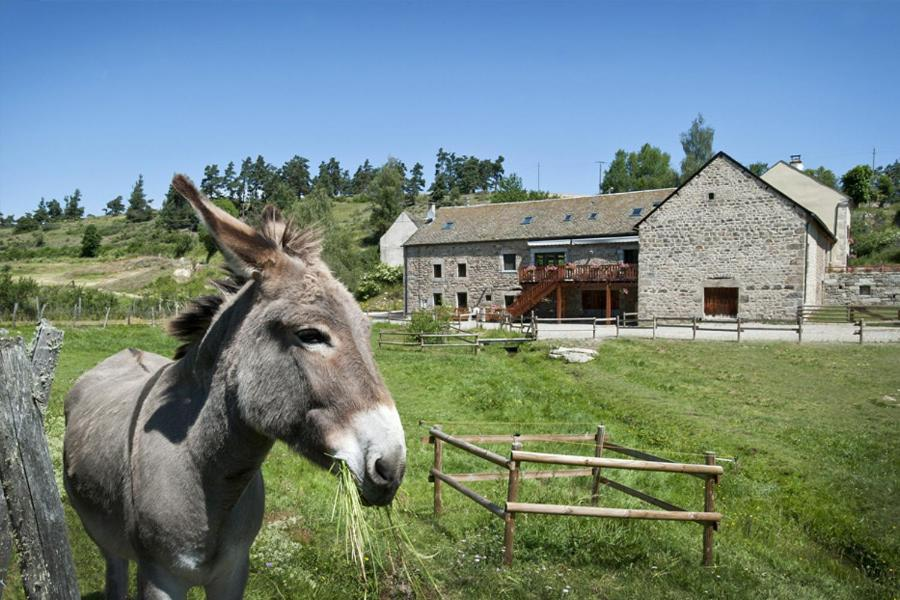Guest Houses In Noalhac Languedoc-roussillon