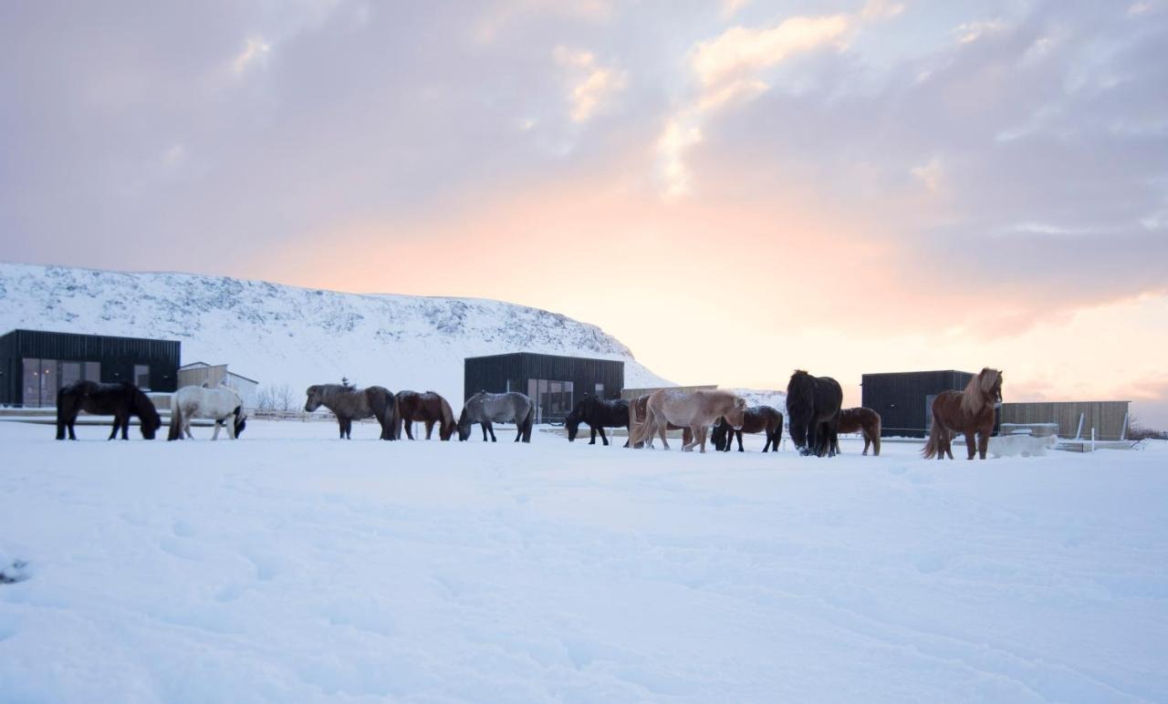 Akurgerði Guesthouse 6 - Country Life Style, Ölfus, Iceland ...