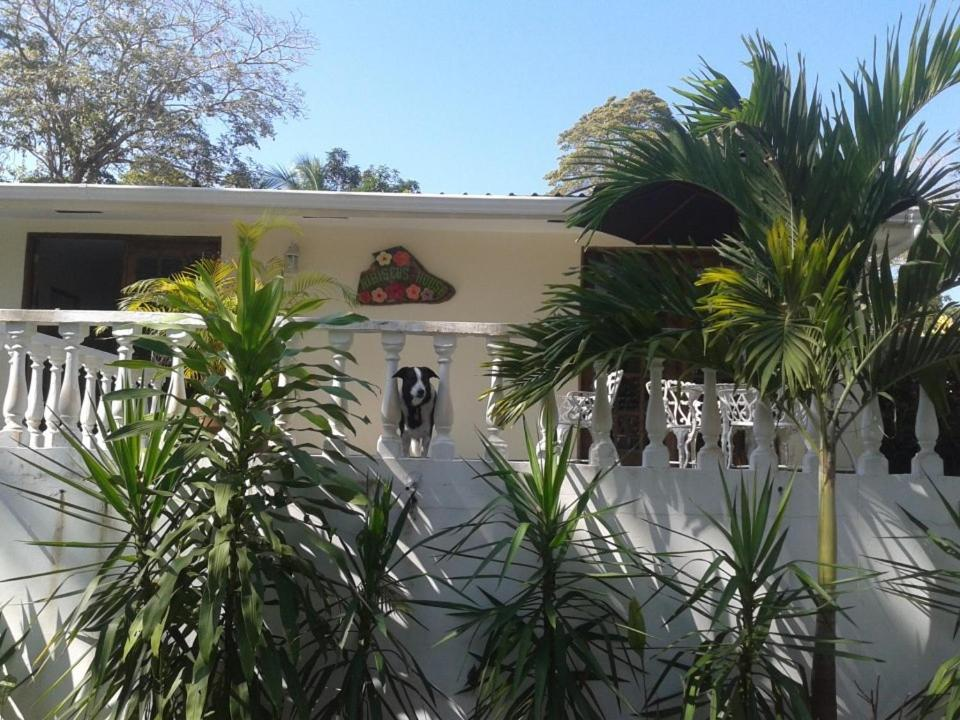 Bed And Breakfasts In Viveros Island Panama