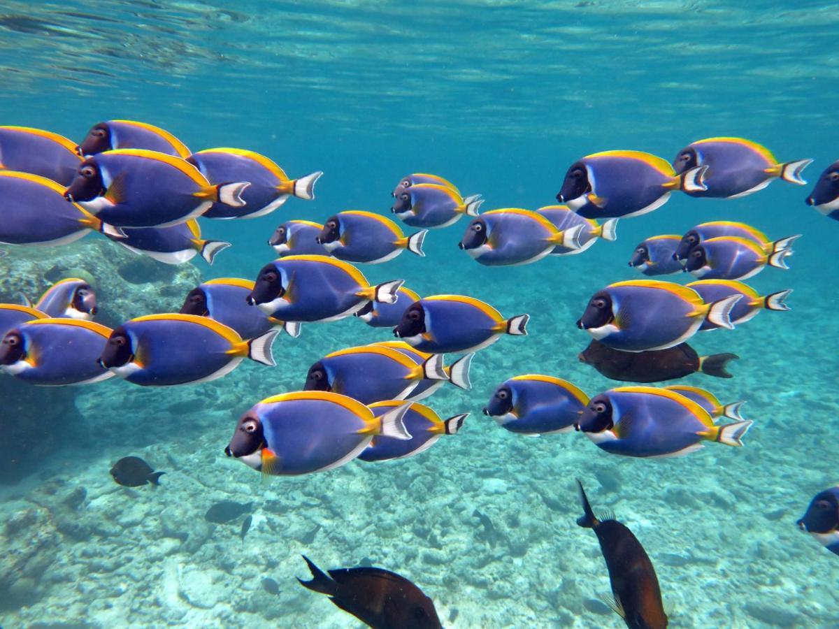 Домашний риф в отеле Four Seasons Мальдивы