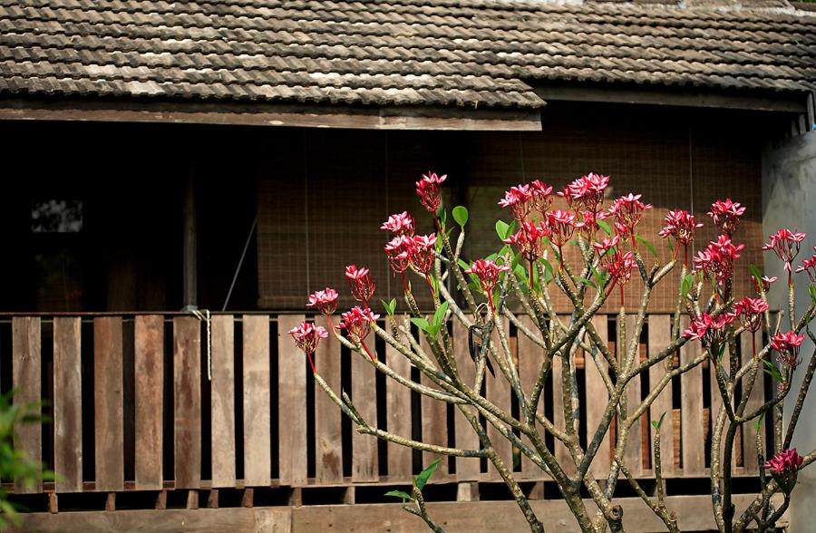 Resorts In Ban Mae Pong Chiang Mai Province