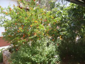A garden outside Holiday Home Morena