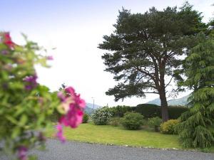 A garden outside Chapelfield Cottage