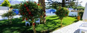A garden outside Mastorakis Hotel and Studios