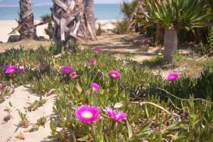 A garden outside Apartamento a la Playa