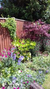 A garden outside Rosebud cottage