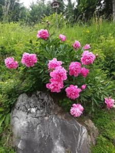Vrt pred nastanitvijo APARTMENT in CHALET BOHINJ