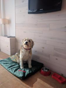 Pet or pets staying with guests at Apartamentos Llobet