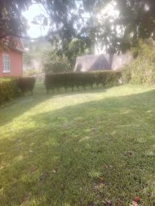 A garden outside 36937