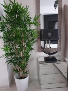 TV o dispositivi per l'intrattenimento presso Studio Rendez-vous Baneasa