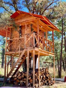 Casa del Árbol en la Sierra de Durango