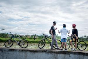 Biking at or in the surroundings of The Desa Ubud
