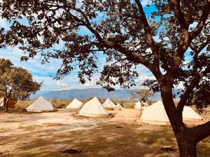 TG Tequila Glamping Hotel