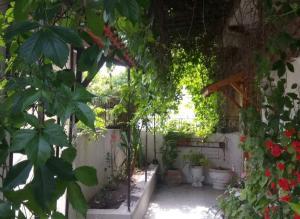 Guest House - Casa Zitouna - Kef, TN