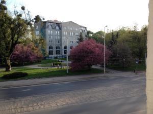 Alfa Apartments