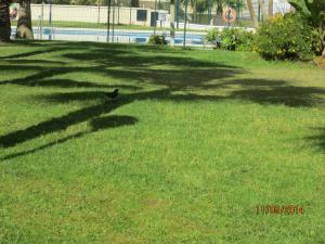 A garden outside Fuengirola Centro