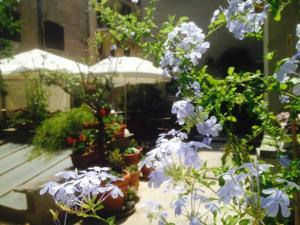 B&B Giardino Del Corso